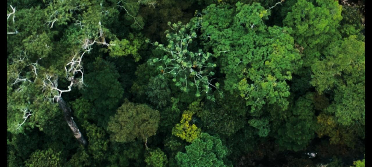 Amazônia Interdisciplinar