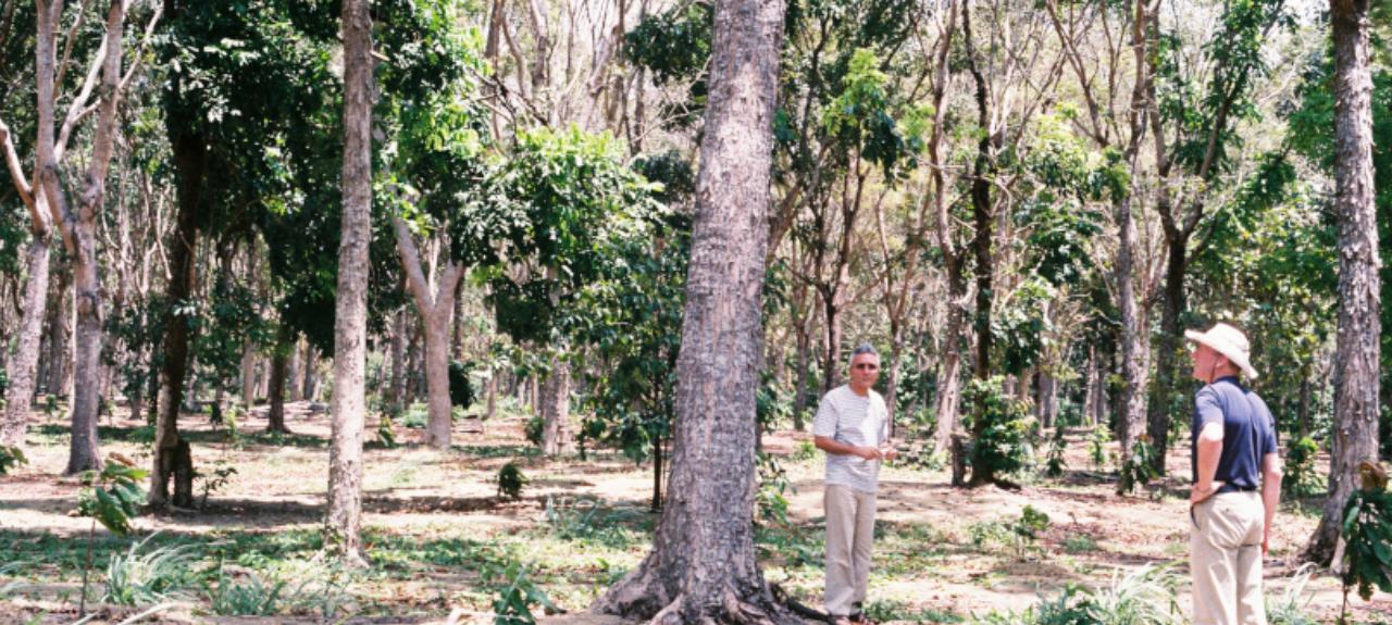 XII CONGRESSO BRASILEIRO DE SISTEMAS AGROFLORESTAIS (XII CBSAF) - CONCILIANDO PESSOAS E EVOLUINDO PARADIGMAS